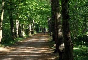 Schlosspark Hohenerxleben